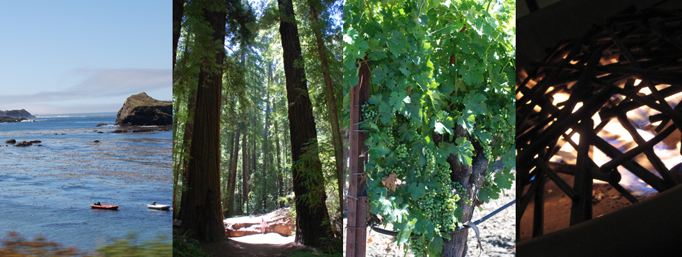 Northern California Redwoods Napa Gluten-Free